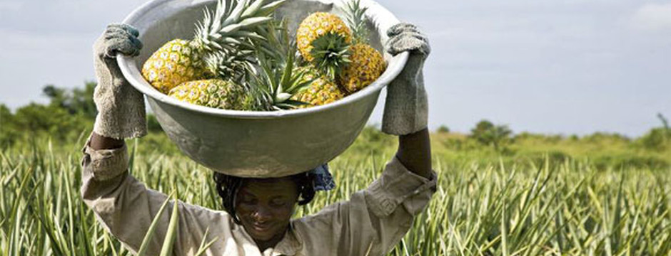 I produttori del Commercio Equo e Solidale rispettano e curano la madre terra - fonte di vita e nutrimento della propria gente